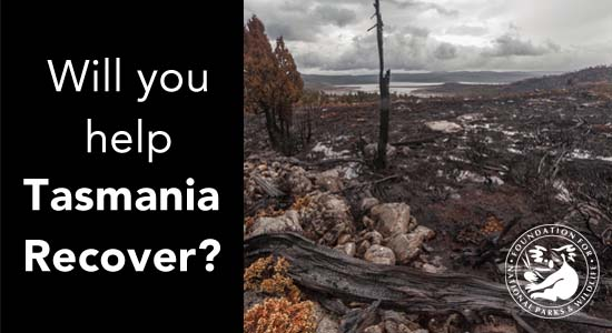 Can you help Tasmania recover?